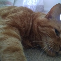 A valuable lesson: stress and a ginger cat
